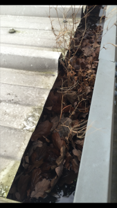Gutter Cleaning Nottinghamshire